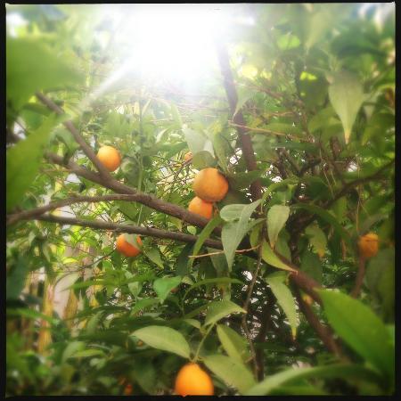 Le Riad Berbère: Mandariniers