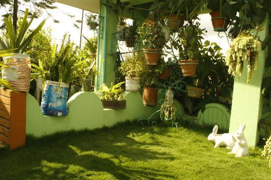 Himalaya's Guest House: Roof Top Garden