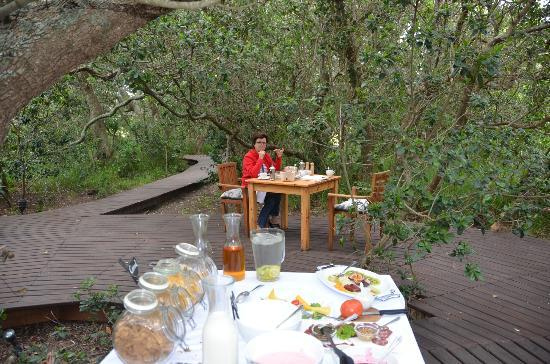 MOSAIC Lagoon Lodge: beakfast under the milkwood tree
