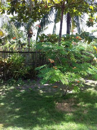Hotel Celtis Resort: Une oasis de verdure 