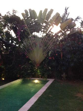 Villa Bali Asri: la piscine et son arbre du voyageur