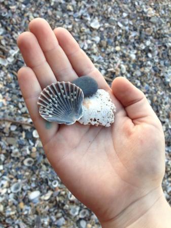 """Burleigh Heads Beach : """"shelly beach"""" @ Burleigh"""