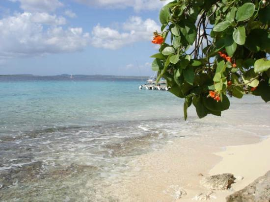 Blachi Koko Apartments Bonaire: steps away from the beach!!