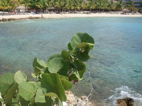 Blue Bay Curaçao Golf & Beach Resort: Der Strand war recht sauber und ruhig
