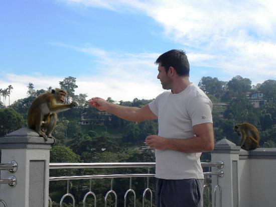 Hotel Kandy Paris: visite des singes lors du petit déjeuner ! Attention quand même ;-)