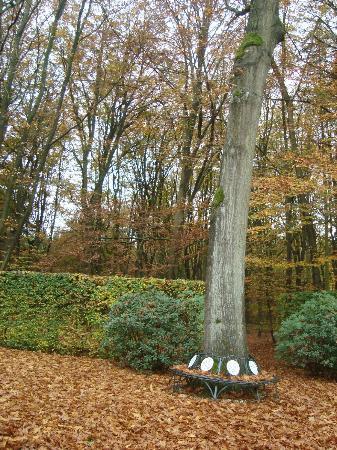 Nol in 't Bosch: vista da floresta ao redor