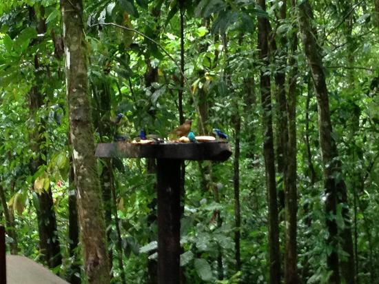 Tree Houses Hotel Costa Rica: Breakfast with the Birds