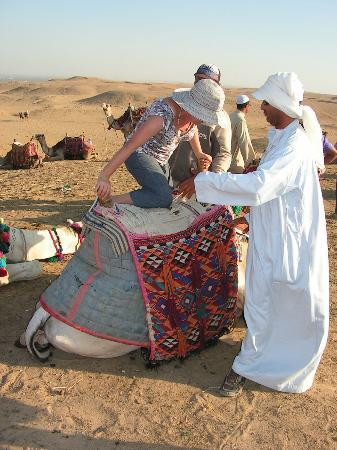 Best Egypt Shore Excursions: Camel rides of varios lengths are available