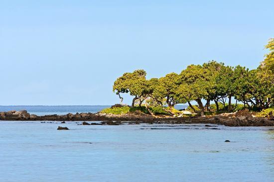 "Waikoloa Beach Marriott Resort & Spa: View of ""A"" bay from the hotel beach."