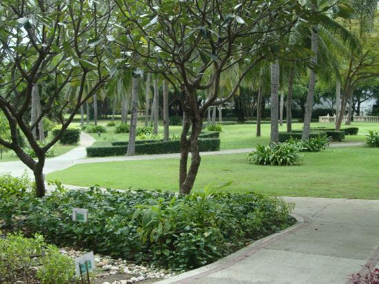 Dusit Thani Hua Hin: the grounds