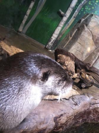 ... main attraction! - Picture of Loveland Living Planet Aquarium, Draper
