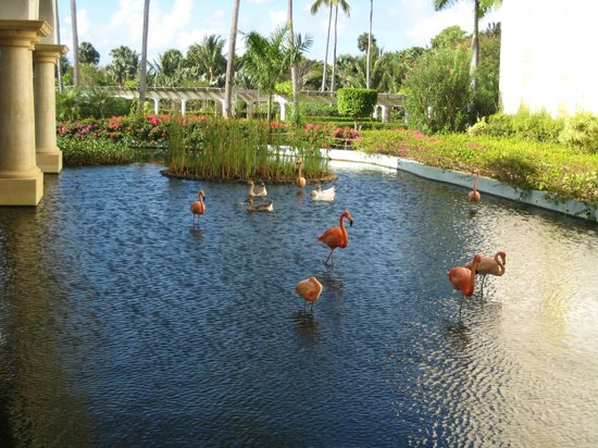 Iberostar Grand Hotel Bavaro: View of pond with flamingos & ducks, on the grounds