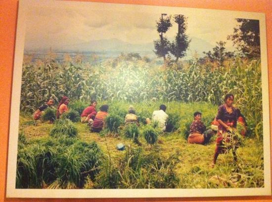 annapurna restaurant: foto en la pared