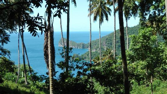 Bay Gardens Beach Resort: Amazing view from Morne Coubaril cocoa Plantation Tour