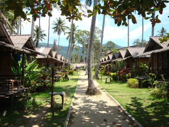Siam Cottage Bungalows: Пальмы на территории.