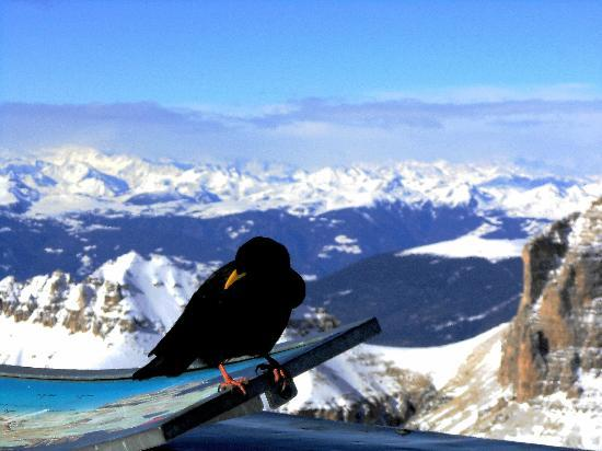 Dolomiti Ski Tour: bird-guide