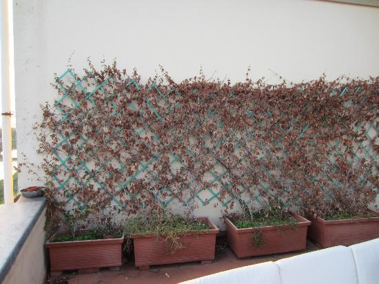 Hotel Consigli: Rooftop dead plants