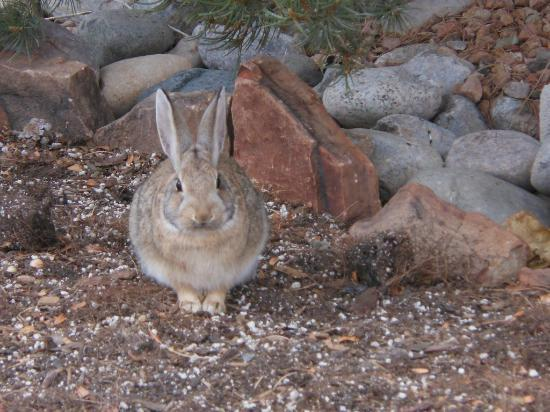 Hyatt Regency Tamaya Resort & Spa: Hares and road-runners roam around the property