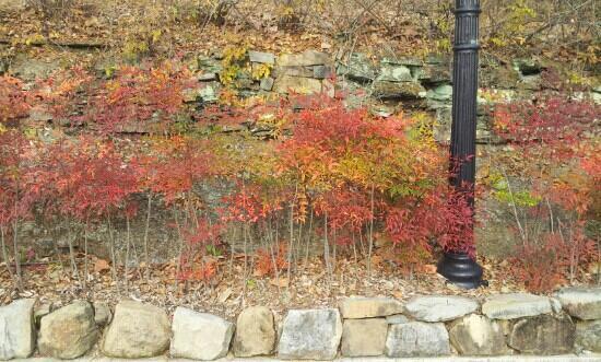 Jinjuseong: 가을