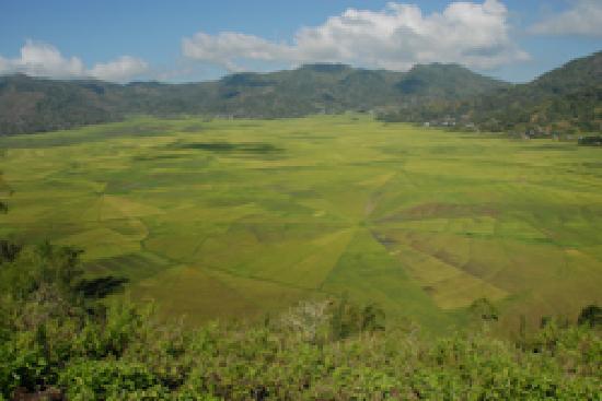 Lingko Spider Web Rice Fields - Walking Tours: getlstd_property_photo