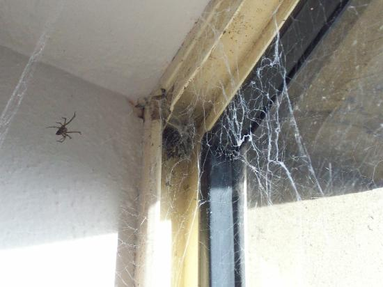 Manly Beachside Apartments: Spider Web And Spider Above Bed