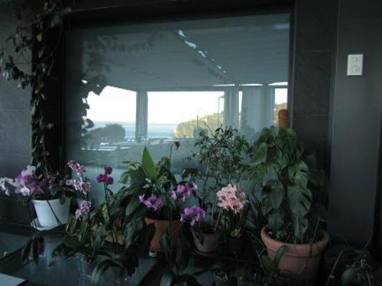Hotel Arbe: ORQUIDEAS EN EL COMEDOR