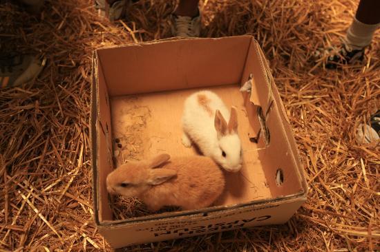 Lindale Farm & Barn: bunnies