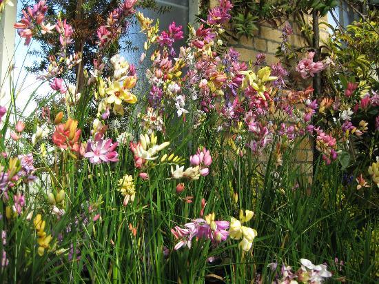 Coast-to-Coast Walkway : The Winter Gardens in Auckland Domaine