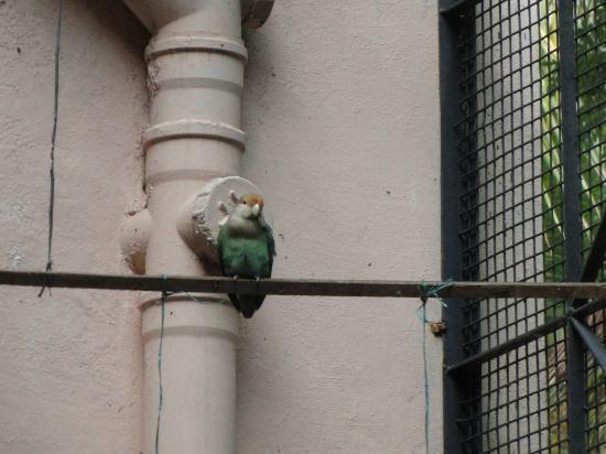 Sunlarge Home Stay: Lovebird