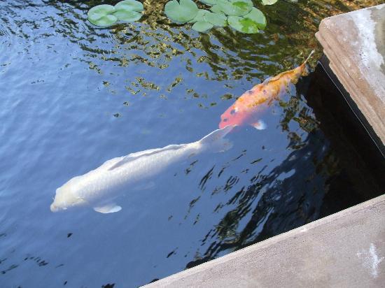 Hotel Botanico & The Oriental Spa Garden: Spa Koi