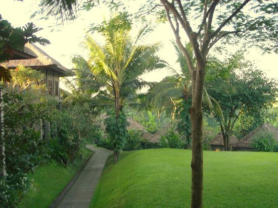 Maya Ubud Resort & Spa: From my room 