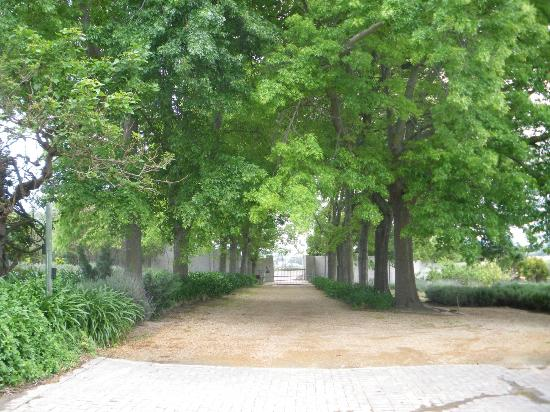 In the Vine Manor House: Trees in the lane