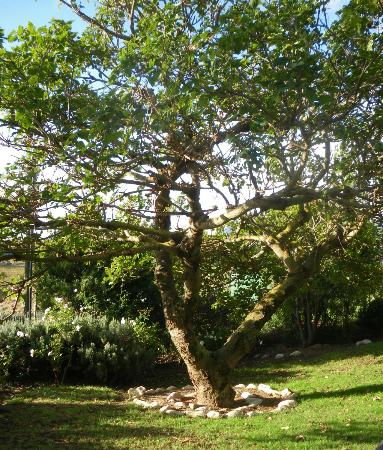 In the Vine Manor House: Just a tree in the Gardens