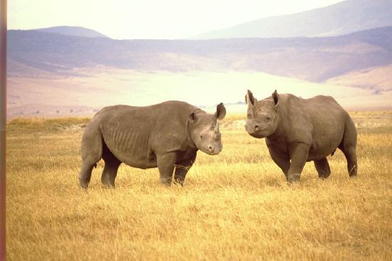 Mlimani Safaris Africa: Ngorongoro Rhino