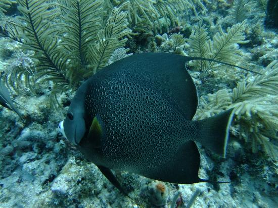 me picture of sail fish scuba key largo tripadvisor