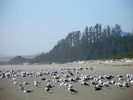 Pacific Rim National Park : Long Beach