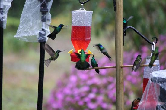 Savegre Hotel, Natural Reserve & Spa: Humming Birds at the feeder