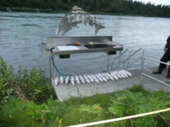Kenai River Lodge: Good Day of Fishing!