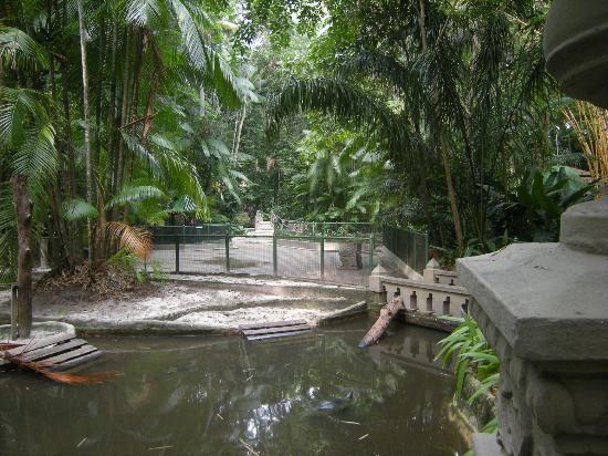 Bosque Rodrigues Alves - Jardim Botanico da Amazonia : Bosque Rodrigues