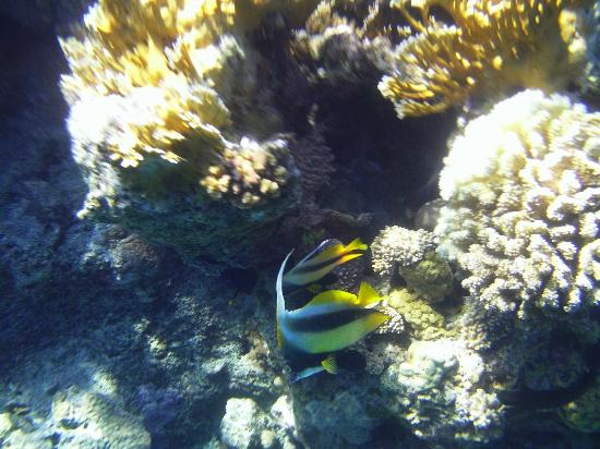 Club Reef Resort: barriera corallina spiaggia