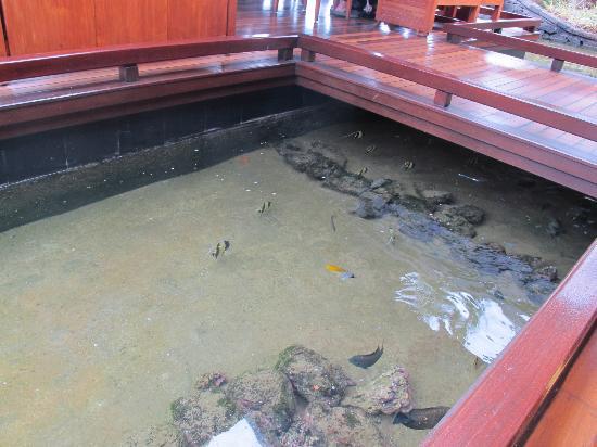 Four Seasons Resort Mauritius at Anahita: Fish Pond