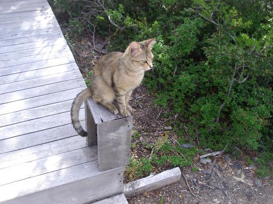 Patagonia Camp's Cat
