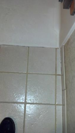 Cousin's Country Inn: Mildew/mold in shower