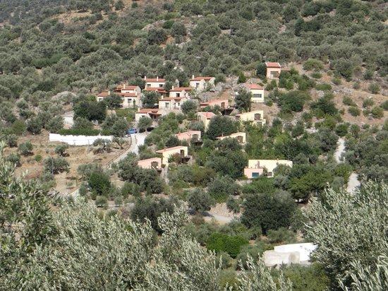 Eleonas vu du coteau d'en face au milieu des oliviers