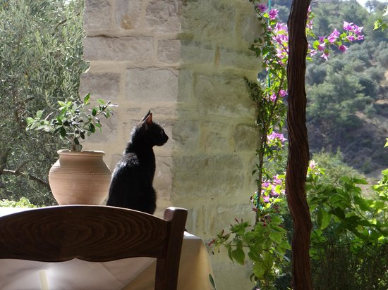 Il y a des chats en Crète, il y a des chats à Eleonas
