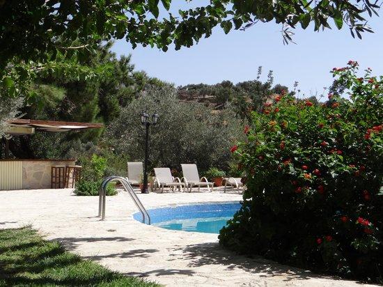 Eleonas:                   La piscine, les chaises longues... le tout entretenu tous les jours