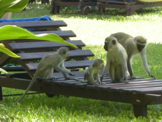 Papillon Lagoon Reef: Monkeys
