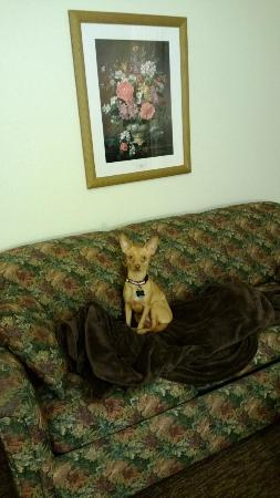 Mark Spencer Hotel: Dog portrait on suite couch