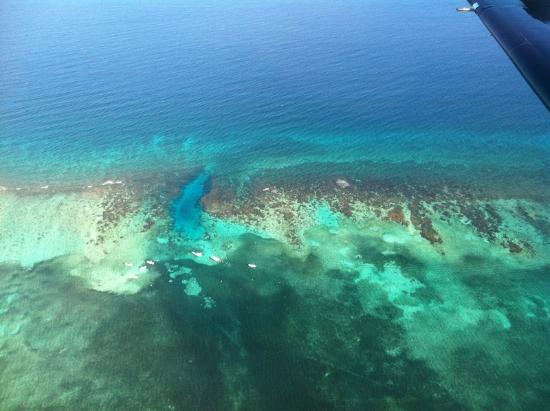 Ramon's Village Resort: Hol Chan in the coral reef
