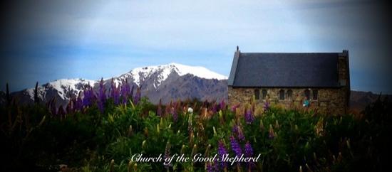 Church of the Good Shepherd: Lupines in November